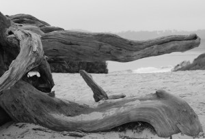 Driftwood Whale BW web
