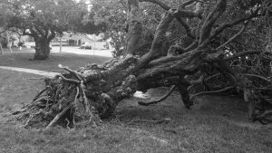 Another Tree Down